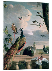 Acrylic print  Palace of Amsterdam with exotic birds - Melchior de Hondecoeter