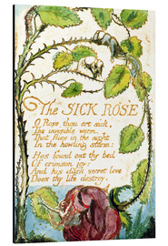 Aluminium print  The Sick Rose - William Blake