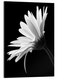 Acrylic print  The flower - Falko Follert