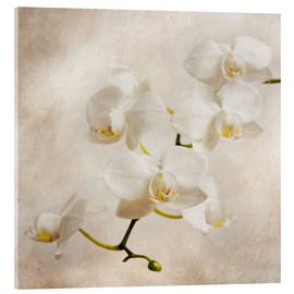 Acrylic print  White orchid - Hannes Cmarits