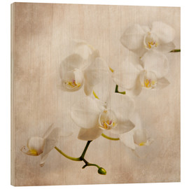 Wood print  White orchid - Hannes Cmarits