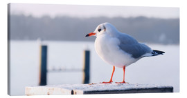Canvas print  Gull - Atteloi