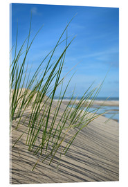 Acrylic print  Dune grasses before playscape - Susanne Herppich