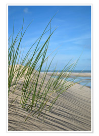 Premium poster  Dune grasses before playscape - Susanne Herppich