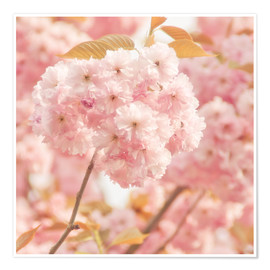 Premium poster  Japan Cherry - INA FineArt