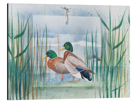 Aluminium print  Pair of wild ducks - Franz Heigl