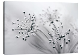 Canvas print  white flowers - Jens Berger