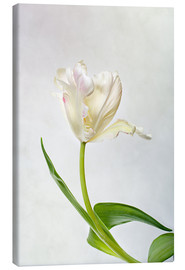Canvas  Tulip - Nailia Schwarz