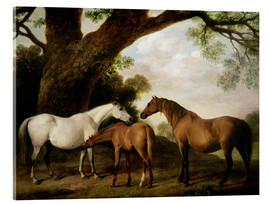 Acrylic print  Two Shafto Mares and a Foal - George Stubbs