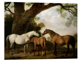 Foam board print  Two Shafto Mares and a Foal - George Stubbs