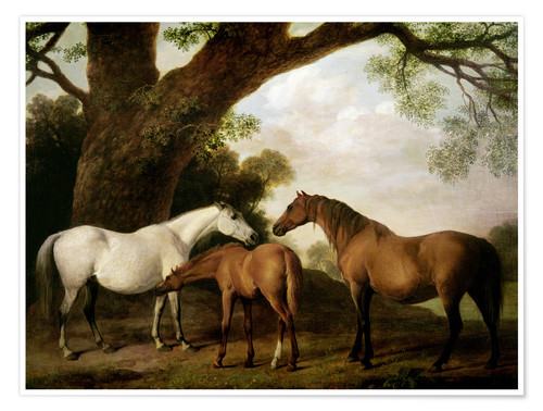 Premium poster Two Shafto Mares and a Foal