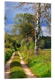 Acrylic print  Forest path with Birch - CAPTAIN SILVA