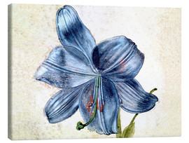 Canvas  Study of a lily - Albrecht Dürer