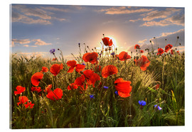 Acrylic print  Poppies in light - Steffen Gierok