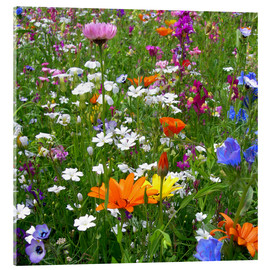 Acrylic print  Flowers meadow - blackpool