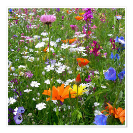 Premium poster  Flowers meadow - blackpool
