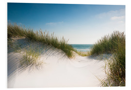 Foam board print  Dune with shiny marram grass - Reiner Würz