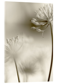 Acrylic print  Softly - Evelyn Meyer