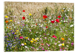 Acrylic print  Summer meadow - Suzka