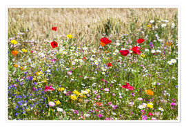 Premium poster Summer meadow