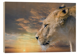 Wood print  Lioness at sunset - Werner Dreblow