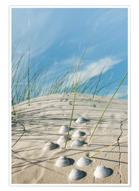 Premium poster  Dune with sea shells - Reiner Würz
