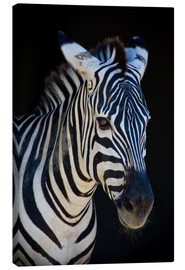Canvas print  zebra : study I - Timo Geble