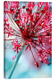 Canvas print  Allium pink - Atteloi
