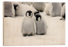 Wood print  Sweet Emperor Penguin Chicks - Keren Su