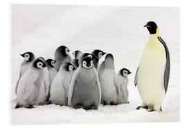 Acrylic glass  Emperor Penguin parent with chicks - Keren Su