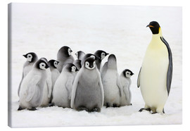 Canvas print  Emperor penguin with chicks - Keren Su