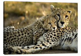 Canvas print  Cheetah cub with mother - Joe & Mary Ann McDonald