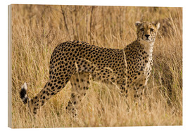 Wood  Cheetah stands between dry grasses - Ralph H. Bendjebar