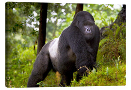 Canvas print  Mountain gorilla on a foray - Ralph H. Bendjebar