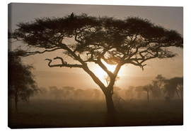 Canvas print  Acacia tree at sunrise - Ralph H. Bendjebar