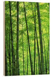 Wood  Tree trunks in a bamboo forest - Keren Su