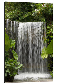 Aluminium print  Waterfall in the orchid garden - Cindy Miller Hopkins