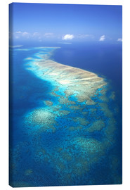 Canvas print  Great Barrier Reef Marine Park - David Wall