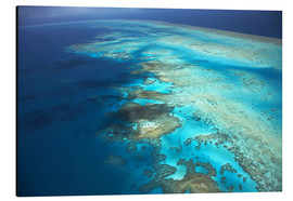 Aluminium print  Great Barrier Reef Marine Park - David Wall
