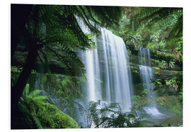 Foam board print  Russell Falls and tree ferns - Kevin Schafer