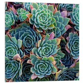 Foam board print  Colorful succulents - David Wall
