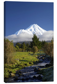 Canvas print  A stream and green meadows at Mount Taranaki - David Wall