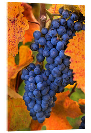 Acrylic glass  Grapes with autumn leaves - Janis Miglavs