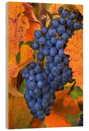 Wood print  Grapes in the autumn leaves - Janis Miglavs