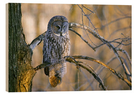 Wood print  Great gray owl on a branch - Gilles Delisle