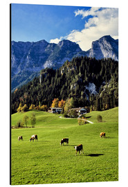 Aluminium print  Alpine views with forest and pasture - Ric Ergenbright