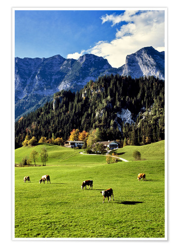 Premium poster Alpine views with forest and pasture