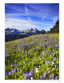 Premium poster  Flower meadow in front of Mount Rainier - Chuck Haney