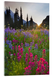 Acrylic glass  Flower meadow at sunrise - Gary Luhm