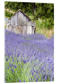 Acrylic print  Lavender field and scales - Janell Davidson